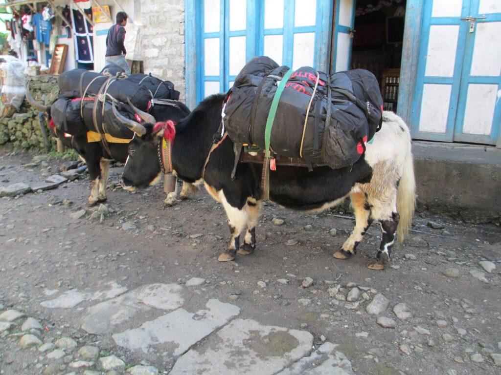 Nepal2012_0231